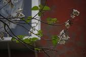 2012與春天有約~台北植物園:1426725656.jpg