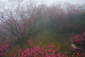 2013陽明山~迷霧朦朧之美:1308565182.jpg