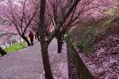 2012武陵農場賞櫻:1837845731.jpg