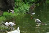 飛鳥練拍~大安森林公園:v 075.JPG