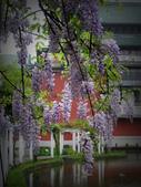 2013紫藤咖啡園:1744203256.jpg