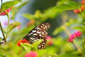 蝴蝶真美麗:1677431246.jpg