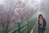 2013陽明山~迷霧朦朧之美:1308565146.jpg