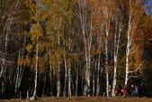 北疆金秋(3)喀納斯湖、禾木村:IMG_4148.JPG