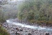 2012武陵冬景~楓葉紅銀杏黃:1305735512.jpg