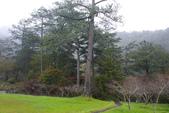2012武陵冬景~楓葉紅銀杏黃:1305735538.jpg