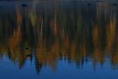 北疆金秋(3)喀納斯湖、禾木村:IMG_3811.JPG