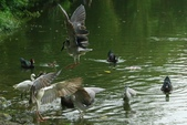 飛鳥練拍~大安森林公園:v 019.JPG