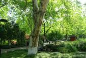 (3)杭州~萬松書院、西湖、南宋官窯、西溪溼地:S 911.JPG