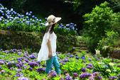 2013與繡球花的美麗約會:1235902697.jpg