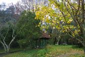 2012武陵冬景~楓葉紅銀杏黃:1305735560.jpg