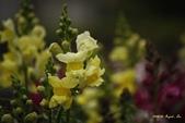 9803花兒寫真:1470786614.jpg