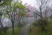 2013陽明山~迷霧朦朧之美:1308565161.jpg