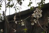 2012與春天有約~台北植物園:1426725657.jpg