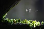 2012繡球花.阿勃勒.:1603065229.jpg