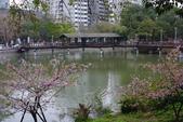 2013新竹麗池之櫻.中正紀念堂梅櫻:1443372224.jpg