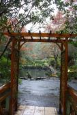 2012武陵冬景~楓葉紅銀杏黃:1305735528.jpg
