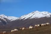 北疆金秋(3)喀納斯湖、禾木村:IMG_4794.JPG