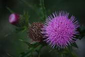 2012與春天有約~台北植物園:1426725636.jpg