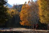 北疆金秋(3)喀納斯湖、禾木村:IMG_4078.JPG