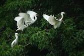 飛鳥練拍~大安森林公園:v 116.JPG