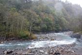 2012武陵冬景~楓葉紅銀杏黃:1305735513.jpg