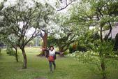 2012春暖花開~流蘇、野薔薇、加羅林魚木…..:1055388504.jpg