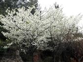 多彩貴州8日遊--雲峰屯堡古鎮&金海雪山:1045696776.jpg