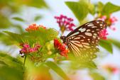 蝴蝶真美麗:1677431249.jpg