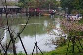 2013新竹麗池之櫻.中正紀念堂梅櫻:1443372225.jpg