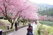 2012武陵農場賞櫻:1837851627.jpg
