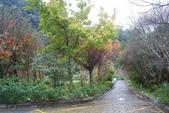 2012武陵冬景~楓葉紅銀杏黃:1305735484.jpg
