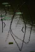 2012留得殘荷聽雨聲:1015070222.jpg