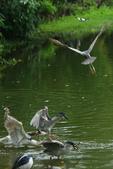 飛鳥練拍~大安森林公園:v 073.JPG