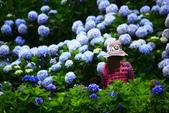 2013與繡球花的美麗約會:1235902713.jpg