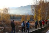 北疆金秋(3)喀納斯湖、禾木村:IMG_4581.JPG