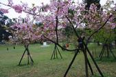 2013新竹麗池之櫻.中正紀念堂梅櫻:1443372244.jpg