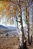 北疆金秋(3)喀納斯湖、禾木村:IMG_4944.JPG