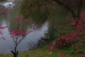 2013新竹麗池之櫻.中正紀念堂梅櫻:1443372227.jpg