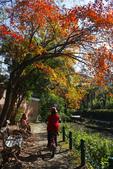 """2013台北植物園~獨領""""楓""""騷:1029877541.jpg"""