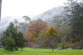 2012武陵冬景~楓葉紅銀杏黃:1305735540.jpg