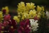 9803花兒寫真:1470786616.jpg