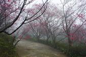 2013陽明山~迷霧朦朧之美:1308565185.jpg