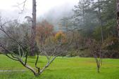 2012武陵冬景~楓葉紅銀杏黃:1305735536.jpg
