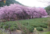 2012武陵農場賞櫻:1837851648.jpg