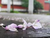 2013紫藤咖啡園:1744203258.jpg