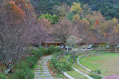 2012武陵冬景~楓葉紅銀杏黃:1305735486.jpg