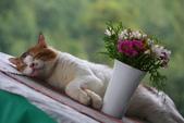 尖石紅薔薇景觀花園餐廳:1278325572.jpg