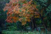 """2013台北植物園~獨領""""楓""""騷:1029870780.jpg"""