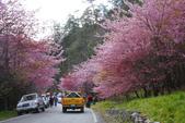2012武陵農場賞櫻:1837851673.jpg